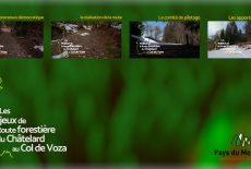 Route forestière du Châtelard au Col de Voza